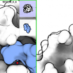 Functional Matching of Protein Surfaces
